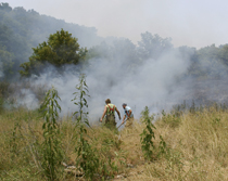 It took members of the Lafayette Fire Department thirty minutes to contain this grass fire, as the flames crackled and popped on Carter Branch Road Sunday afternoon, July 1st. One firefighter was transported by the EMS to Macon County General Hospital suffering from severe dehydration and heat exhaustion.